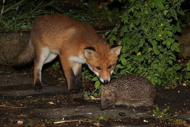 The Fox And The Hedgehog Dynamic Ecology