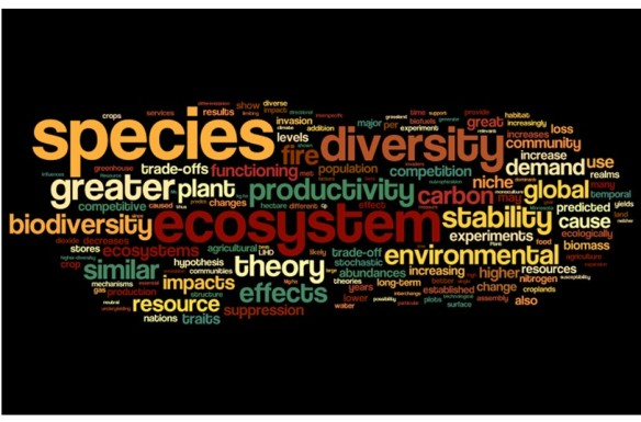 dave tilman wordle