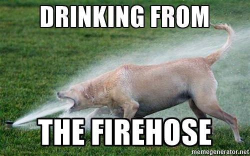 sprinkler dog drinking from the firehose dynamic ecology