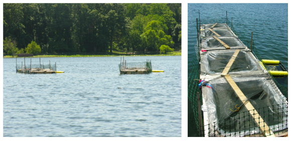 left picture shows two objects in the distance in a lake; the most obvious thing about them is fencing at the surface; the left picture shows a close up of one of them where you can see five individual bag enclosures