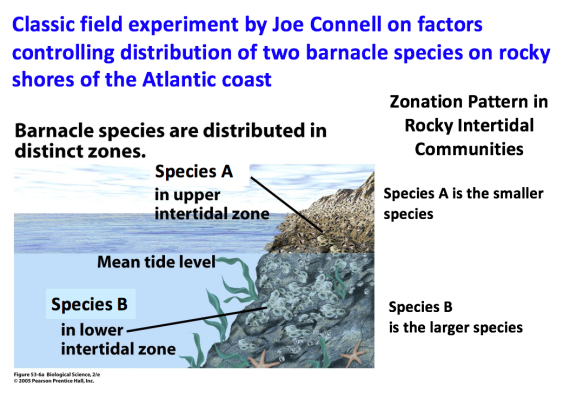 slide says Species A is in the upper intertidal zone and is smaller, and species B is in the lower intertidal zone and is larger